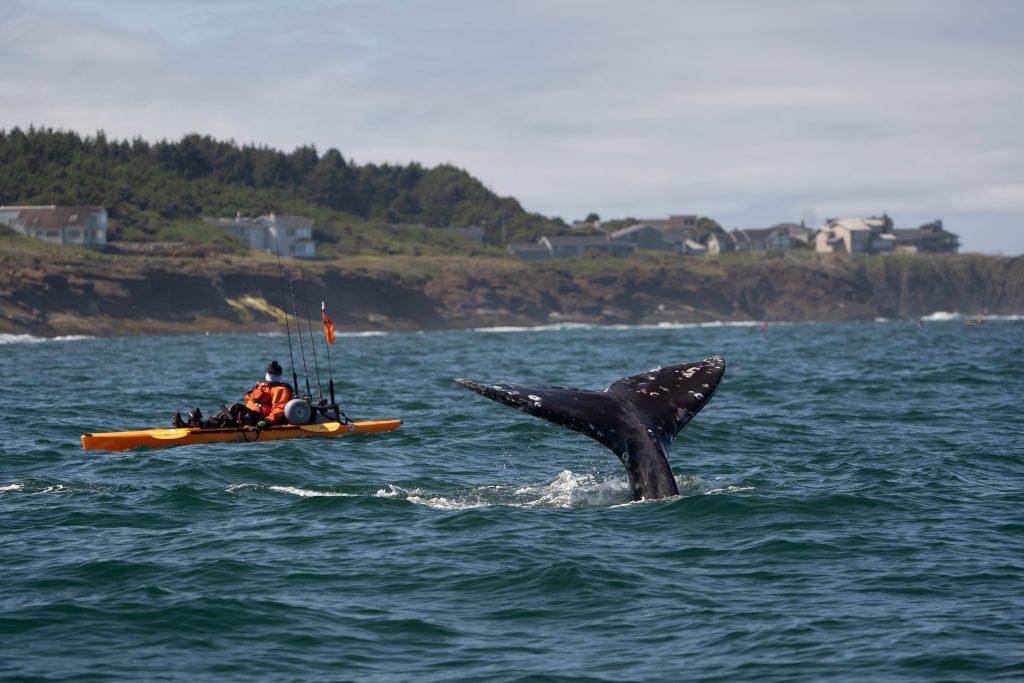 Kayaker watching a whale fluke near shore along the Oregon coast